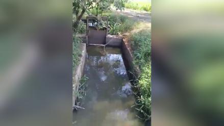 Lambayeque | Agricultores denuncian contaminación de cultivos de arroz con aguas fecales