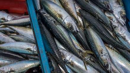 Certificaciones pesqueras: ¿Qué son y qué promueven?