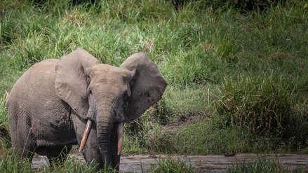 El país con más elefantes del mundo decide permitir la caza de estos animales