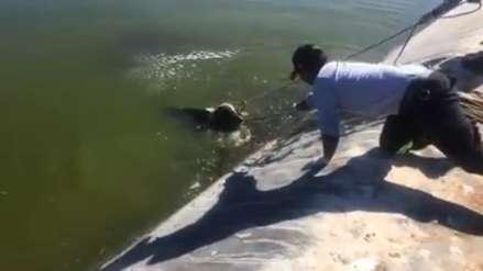 Así rescataron a un perro que cayó a un estanque en Arequipa [Video]