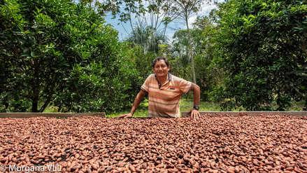La otra ruta   Cacao para resistir