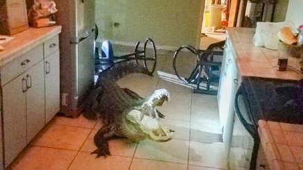 EEUU: Anciana pensó que un ladrón había entrado a su casa, pero descubrió que era un cocodrilo