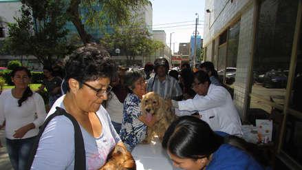Chiclayo | Más de 200 perros y gatos son vacunados y desparasitados