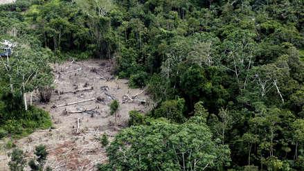 Más de dos millones de hectáreas de bosque perdidas en el siglo XXI