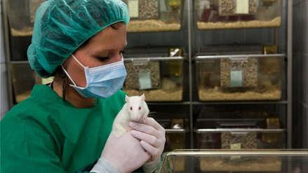 Científica urge a que también se usen ratones hembras en estudios de laboratorio