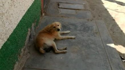 Mujer cortó los genitales a un perro luego que este 'pisara' a su mascota
