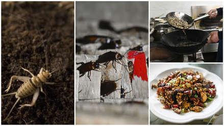 Harina de insectos y helado de grillos: las insólitas alternativas ante la escasez de alimentos