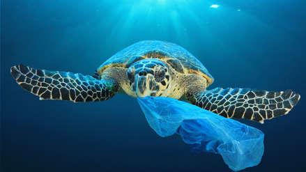 8 de junio: ¿Por qué celebramos el Día Mundial de los Océanos?