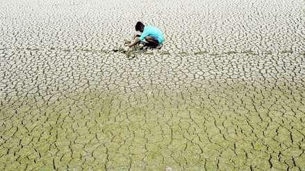 Sequías y temperaturas mayores a 50° provocan riñas y extrañas conductas en animales de la India