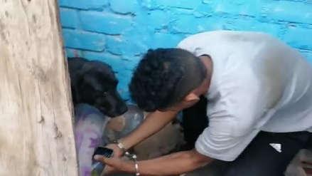 Detienen a ladrón y descubren que su cómplice ocultaba celulares robados bajo un colchón de perro