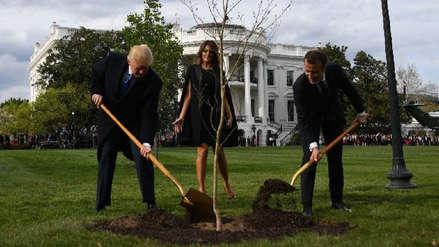 Murió el árbol que plantaron Trump y Macron como señal de amistad