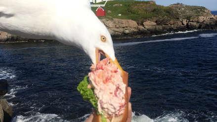 EE.UU. | Una gaviota se convirtió en viral tras robarse un sándwich de langosta