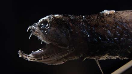 """""""Es como un monstruo de 'Alien'"""