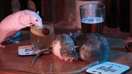Un bar de Estados Unidos ofrece a sus clientes acariciar y jugar con ratas [FOTOS]