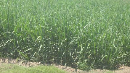 La industria azucarera en el Perú