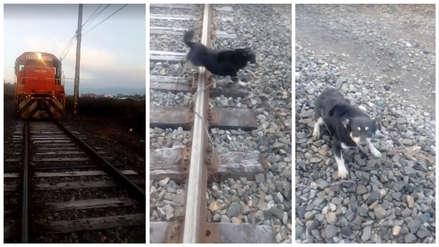 Conductor de tren frenó de golpe para salvar a un perrito encadenado en los rieles [VIDEO]