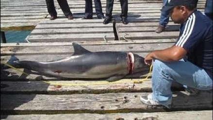 Condenan a pescador por extraer y cortar en pedazos a delfín en La Libertad
