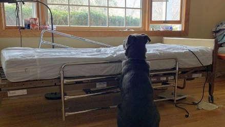 La fotografía de un perro esperando en camilla de hospital a su dueño fallecido rompe corazones en redes