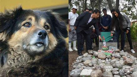 Larga vida a 'Perrovaca': Universidad de San Marcos levanta placa conmemorativa a su mascota querida
