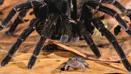 Insectos gigantes y hermosos: 5 historias recientes sobre arañas, abejas y mariposas