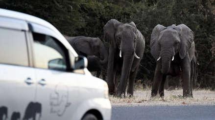 """""""Venían de la selva y destruían"""": Los granjeros que celebran el regreso de la caza de elefantes"""