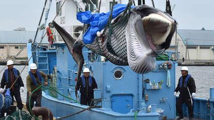 Embarcaciones japonesas capturan dos ballenas en primera caza comercial tras 30 años de prohibición