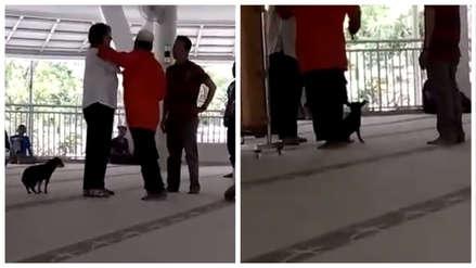 Una mujer que ingresó con un perro a una mezquita será acusada por blasfemia en Indonesia [VIDEO]