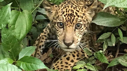 Senda Verde: un refugio para animales rescatados del tráfico de especies en Bolivia