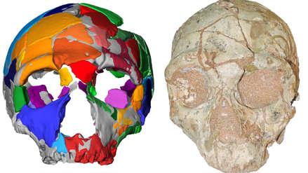 Científicos identifican en Grecia al Homo sapiens no africano más antiguo
