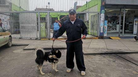 Piden ayuda para operación de perro siberiano que fue atropellado en Lima