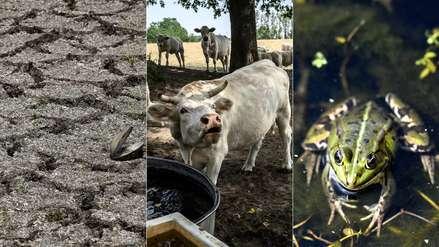 Y cada año será peor: 25 conmovedoras fotos de la histórica sequía que azota a Europa