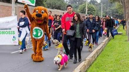 Mil perros abandonados serán esterilizados con dinero recaudado en Caninatón de Surco [FOTOS]