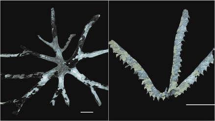 Descubren fósiles de 480 millones de años en el VRAEM, los más antiguos del Perú