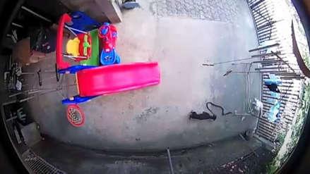 La brutal pelea entre dos perros y una cobra por defender a una niña en Filipinas