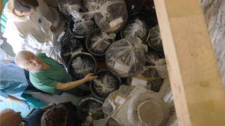Restos hallados en osarios del Vaticano son anteriores al caso de Emanuela Orlandi