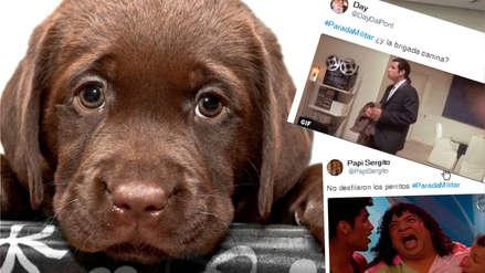 Redes sociales están furiosas por ausencia de la brigada canina en la Gran Parada Cívico Militar