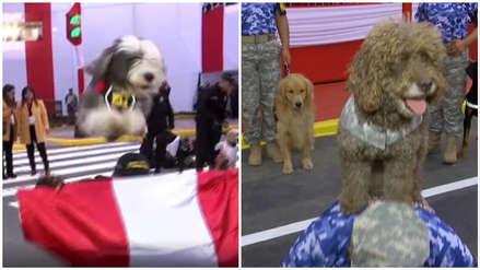 Perritos de la Policía y de la Marina demuestran sus habilidades en Parada Militar de Fiestas Patrias
