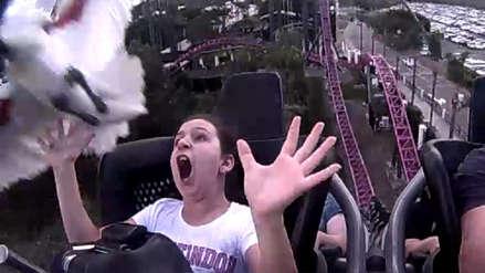 Un ave impacta en el rostro de una mujer cuando se encontraba en una montaña rusa en Australia