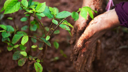 Etiopía pretende plantar 4 mil millones de árboles contra el cambio climático