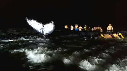 Pescadores, salvavidas y pobladores luchan por salvar a una ballena varada en Tumbes