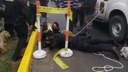 Callao | Policías rescatan un perro que quedó atrapado dentro de un buzón [VIDEO]
