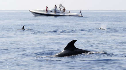 Italia: Misteriosa muerte de delfines a los que se les encontró el estómago casi vacío