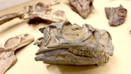 Una estudiante descubrió nueva especie de dinosaurio que había sido confundida por tres décadas