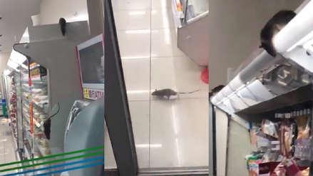 Espeluznante: Captan a ratas en estantes de comida en local de cadena japonesa [VIDEO]