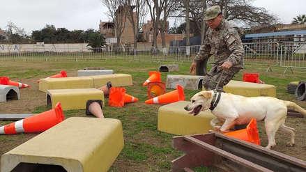 Fuerza Aérea adiestra a perros brigadistas en trabajos de búsqueda y rescate de personas [FOTOS]