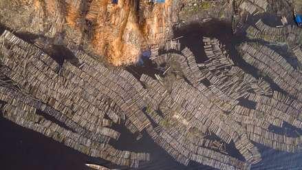 Bosques saqueados: regentes forestales falsificaron más de 1200 expedientes para lavar madera