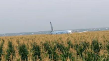 Avión con 233 personas choca con bandada de aves y aterriza de panza en un campo de maíz en Rusia