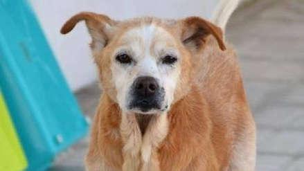 El conmovedor caso de Cuco, el perro que murió el mismo día que su dueña
