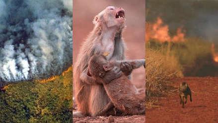 Que no te sorprendan: estas fotos virales sobre los incendios que arrasan la Amazonia son engañosas