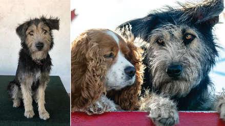 Conoce la tierna historia de Monte, el perro callejero que protagoniza